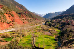 Ourika valley green fields. And red rocks over river Royalty Free Stock Images