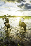 Ourists ride horses in the Pantanal, Brazil. The Pantanal is the world's largest tropical wetland areas located in Brazil , South America royalty free stock images