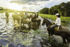 Ourists ride horses in the Pantanal, Brazil. The Pantanal is the world's largest tropical wetland areas located in Brazil , South America stock photography