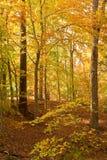 Ouro da cena do outono Imagem de Stock Royalty Free