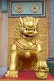 Ouro do leão Fotos de Stock