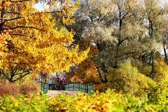 Ouro do outono do parque Imagens de Stock Royalty Free
