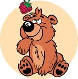 Ours avec des framboises Photo libre de droits