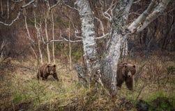 Ours avec l'enfant photos stock