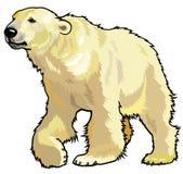 Ours blanc illustration libre de droits