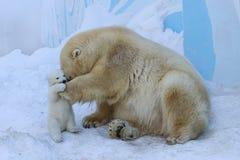 Ours blanc avec l'animal Amour de mère Photographie stock libre de droits