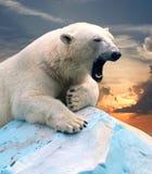 Ours blanc contre le coucher du soleil image stock