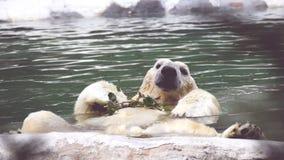 Ours blanc curieux Photographie stock libre de droits