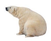 Ours blanc. D'isolement au-dessus du blanc image stock