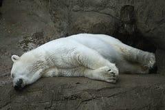 Ours blanc dans un zoo Images stock