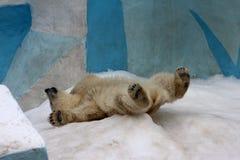 Ours blanc de bébé dans le zoo photographie stock libre de droits