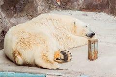 Ours blanc de sommeil dans le zoo image stock