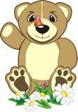 Ours brun d'Eurasie parmi des camomilles Image libre de droits