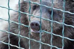 Ours dans la cage Photographie stock