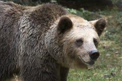 Ours dans la forêt photographie stock libre de droits