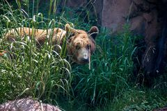 Ours dans le zoo photographie stock