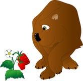Ours de Brown avec les yeux verts illustration de vecteur
