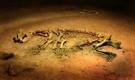 Ours de caverne - spelaeus d'Ursus - squelette photo stock