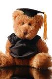 Ours de graduation Images libres de droits