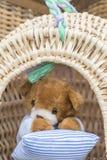 Ours de nounours dans le panier Image libre de droits