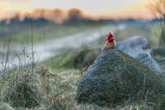 Ours de nounours dans le paysage Photo libre de droits