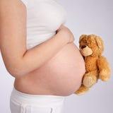 Ours de nounours et ventre enceinte Images libres de droits
