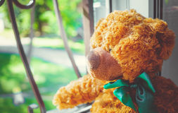 Ours de nounours piaulant dans la fenêtre Images stock
