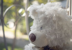 Ours de nounours regardant hors de la fenêtre Photos libres de droits
