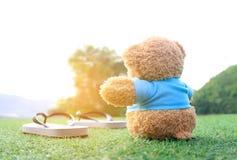 Ours de nounours se reposant sur l'herbe avec la lumière de lever de soleil d'éclat Images stock