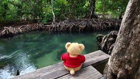 Ours de nounours se reposant sur un pont près du canal naturel Le courant vert clair traverse la racine de forêt de palétuvier banque de vidéos