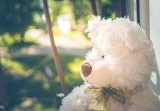 Ours de nounours triste mignon Photographie stock