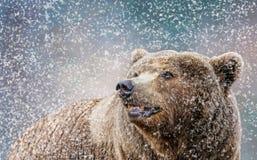 Ours en portrait de neige Image libre de droits