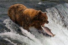 Ours environ pour attraper des saumons dans la bouche Photo stock