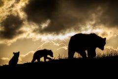 Ours et CUB de Brown dans le coucher du soleil Images libres de droits