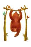 Ours faisant menton-UPS Photographie stock