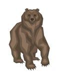 Ours gris de Big Bear illustration stock