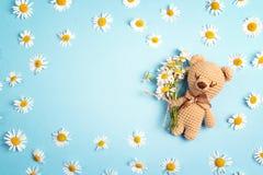 Ours mignon de jouet avec des fleurs de camomille et espace de copie sur un Ba bleu Image libre de droits