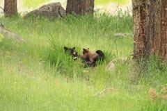 Ours noir avec des petits animaux photo stock