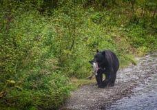 Ours noir et copain photo libre de droits