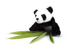 Ours panda avec l'activité d'humain quotidiennement sur le blanc d'isolement images libres de droits