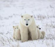 -ours polaire avec des petits animaux. photo stock