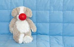 Ours rouge de Jour-jouet de nez portant un nez rouge sur un édredon bleu Images stock