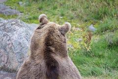 Ours se reposant sur l'herbe photographie stock