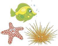 Oursin, étoiles de mer et poissons Images libres de droits