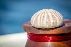Oursin et lignes de pêche photographie stock
