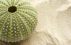 Oursin et sable Photos libres de droits