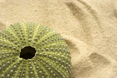 Oursin sur le sable Photographie stock