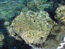 Oursins dans Evia photographie stock libre de droits