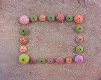 Oursins formating le cadre vide sur le sable humide Photographie stock