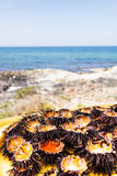 Oursins méditerranéens Photo stock